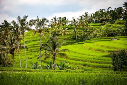Снимка: Индонезия заделя над 1 млрд за справяне с последиците от природни бедствия