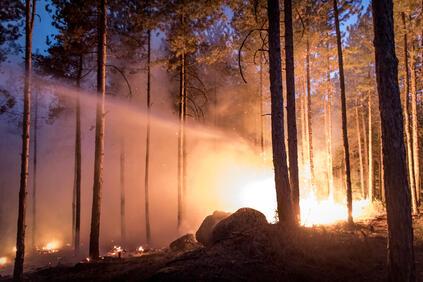 Снимка: Тръмп иска спиране на помощта за пострадалите от горските пожари в Калифорния